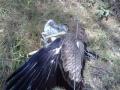 aigle5